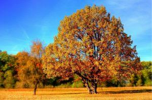 Safe autumn activities